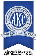 Eiledon Briards is an AKC Breeder of Merit