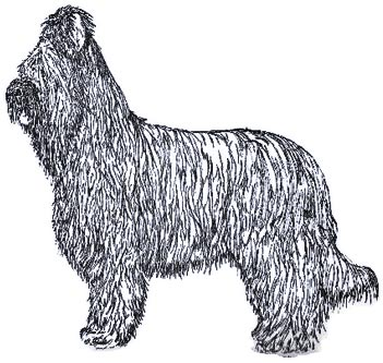 briard-drawinghistory
