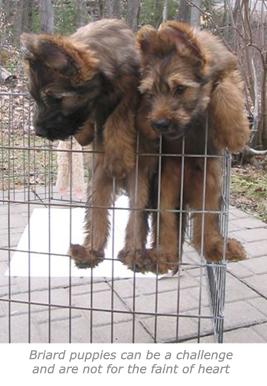 escape-puppies