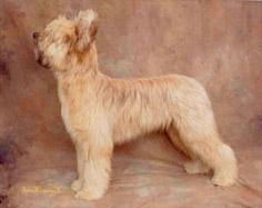 tison-puppy